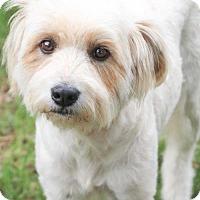 Adopt A Pet :: Lola - Helotes, TX
