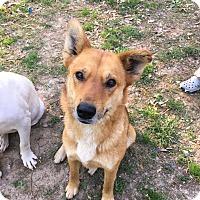 Adopt A Pet :: River - sweet~ meet me! - Glastonbury, CT