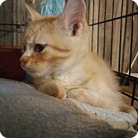 Adopt A Pet :: Peabody - Corydon, IN