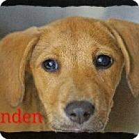 Adopt A Pet :: Linden - Old Saybrook, CT