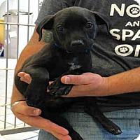 Adopt A Pet :: KOKOMO - Canfield, OH