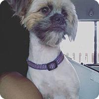 Adopt A Pet :: Leia - coming 9/29 - Hillside, IL