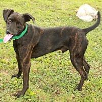 Adopt A Pet :: Cliff - Newark, NJ