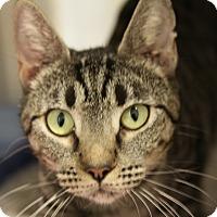 Adopt A Pet :: Sparkle - Sarasota, FL