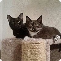 Adopt A Pet :: Juno & Presto - Ocala, FL