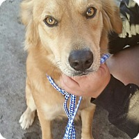 Adopt A Pet :: Maggie - Chiefland, FL