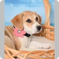 Adopt A Pet :: Kai - Pittsboro, NC