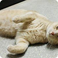 Adopt A Pet :: Skeeter - Seguin, TX