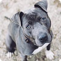 Adopt A Pet :: Coal - Cleveland, OH