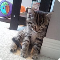 Adopt A Pet :: Bea - Adoption Pending - Blackstock, ON