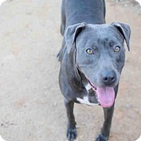 Adopt A Pet :: QUEENIE - Atlanta, GA