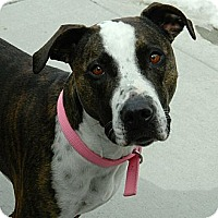 Adopt A Pet :: Kyann - Cheyenne, WY