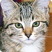 Adopt A Pet :: Lana - Irvine, CA