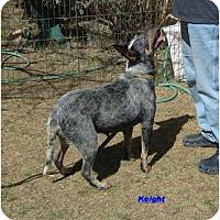 Adopt A Pet :: Keight - Phoenix, AZ