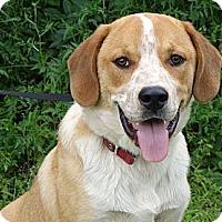 Adopt A Pet :: *Tony  - PENDING - Westport, CT