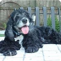 Adopt A Pet :: Mac - Sugarland, TX
