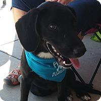 Adopt A Pet :: Jett - Marietta, GA