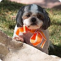 Adopt A Pet :: Lancelot - Sherman Oaks, CA
