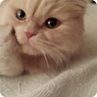 Adopt A Pet :: Beau - Columbus, OH