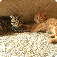 Adopt A Pet :: George - Fairborn, OH