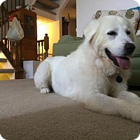 Adopt A Pet :: Eleanora - Baltimore, MD
