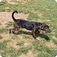 Adopt A Pet :: Mountaineer - Ijamsville, MD