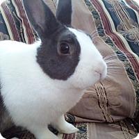 Adopt A Pet :: Spartan - Watauga, TX