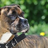 Adopt A Pet :: COOKIE - Huntington Beach, CA