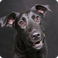 Adopt A Pet :: Kiara - Sudbury, MA