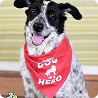Adopt A Pet :: Boomer - Gulfport, MS