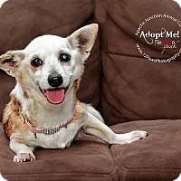 Adopt A Pet :: Hailey - Apache Junction, AZ