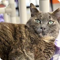 Adopt A Pet :: Tabitha - Sarasota, FL