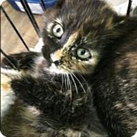 Adopt A Pet :: Alicia - N. Billerica, MA