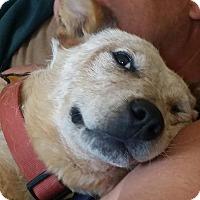 Adopt A Pet :: Pearl - Ogden, UT