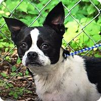 Adopt A Pet :: Bosco - Oswego, IL