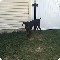 Adopt A Pet :: Abby - Omaha, NE