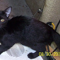 Adopt A Pet :: TIARA - Morriston, FL