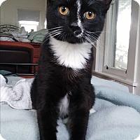 Adopt A Pet :: Sheldon - Oakland, OR