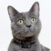 Adopt A Pet :: Whiskers - Truckee, CA