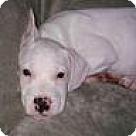 Adopt A Pet :: Baby Jasmine