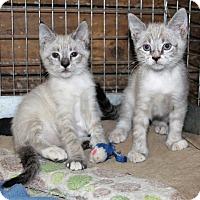 Adopt A Pet :: Nora - Prospect, CT