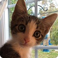 Adopt A Pet :: Vance - Wayne, NJ