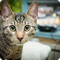 Adopt A Pet :: Oliver - New York, NY