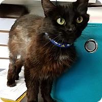 Adopt A Pet :: Cinder - Basehor, KS