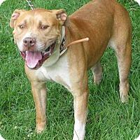 Adopt A Pet :: Norm, D52 - Mineral, VA