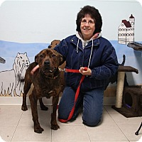 Adopt A Pet :: Emily - Elyria, OH