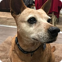 Adopt A Pet :: Fiona - Frankfort, IL