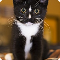 Adopt A Pet :: A..  Duke - Mooresville, NC