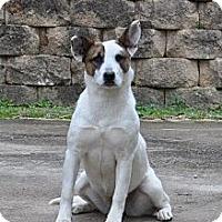 Akita/Shepherd (Unknown Type) Mix Dog for adoption in Locust Fork, Alabama - Target