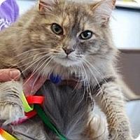 Adopt A Pet :: Sarah 03-3478 - Fremont, CA